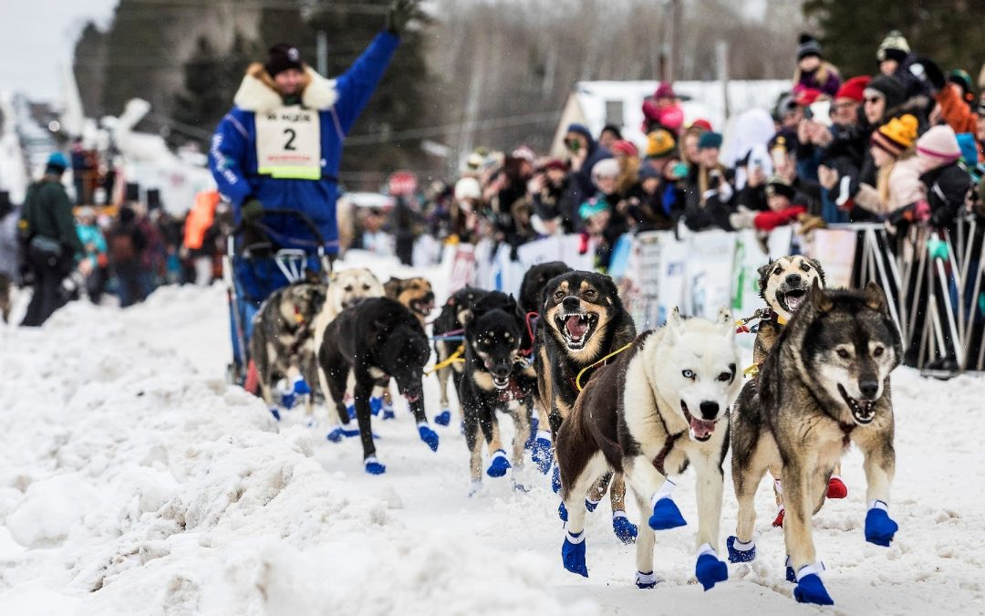 CBS WATCH: Beargrease Race To Get Share Of Proceeds From Sled Dog Movie